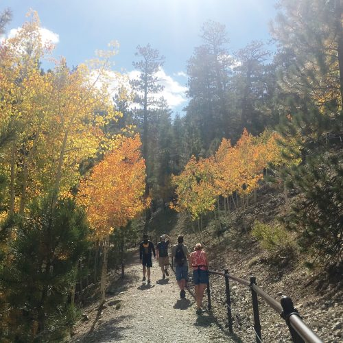 guided fall hike at upper bristlcone trail
