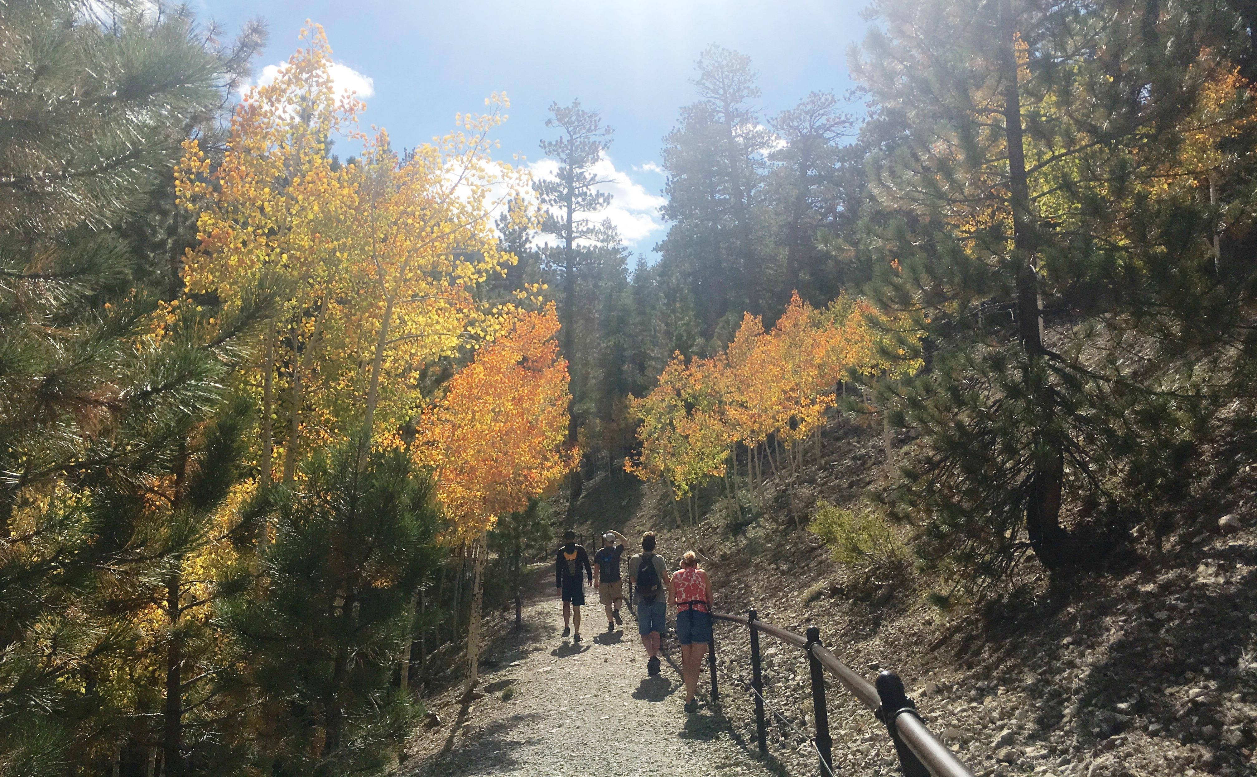 guided fall hike at upper bristlcone trail