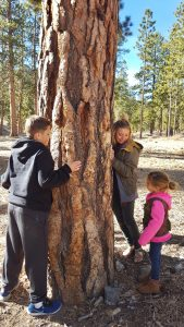 Learning about Ponderosa Pines