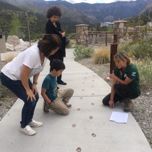Jr ranger animal track activity at SMVG
